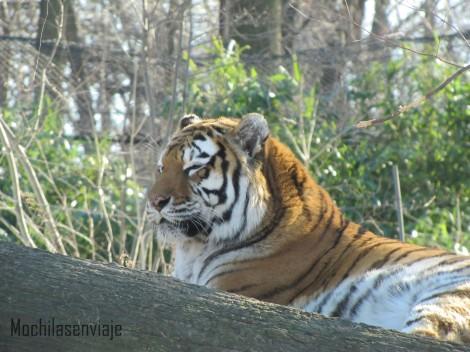 En el gigantesco zoológico del Bronx