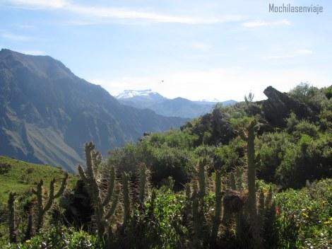 Primeras vistas del hermoso Colca.