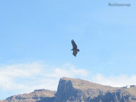 Avistaje del Condor