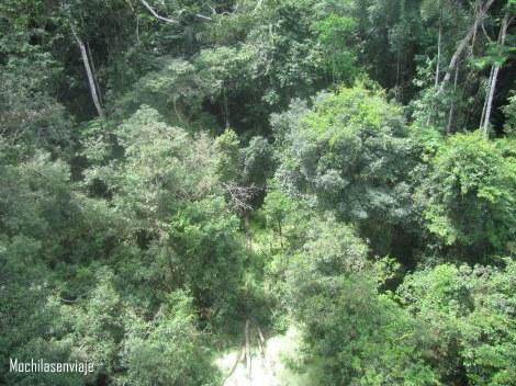 La selva vista desde arriba