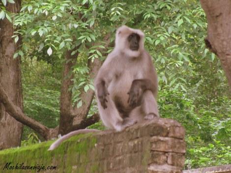 Mono fuera de foco