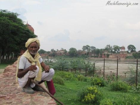 Pastando cabras en las afueras del Taj
