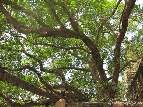 El famoso árbol