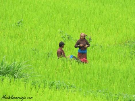 Familia trabajando en las terrazas de arroz