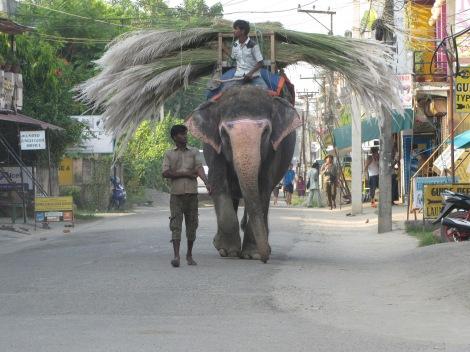 Chitwan 5