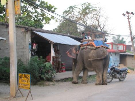 elefantes, hasta para ir de compras...