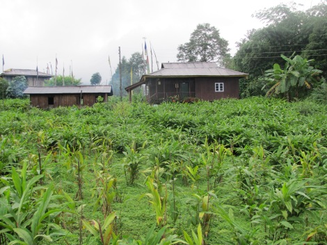 Campos de cardamomo en Kecheopalri