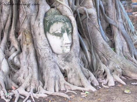 Una de las imágenes típicas de la ciudad de Ayutthaya