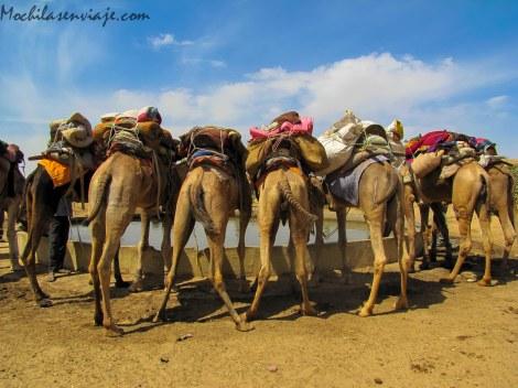 Jaisalmer -5