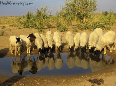 Parada a tomar agua